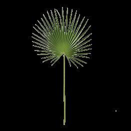 Hoja de palmera Alt 100 cm verde, lote de 3