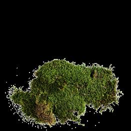 Musgo vegetal (saco de 500 grs)